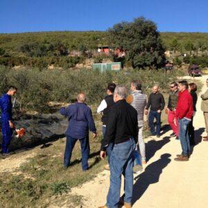 Experiencia finca olivos ecológicos