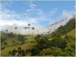 parque-nacional-nevados-colombia-sao