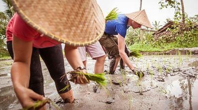 Ricefield trip-vietnam turismo sostenible