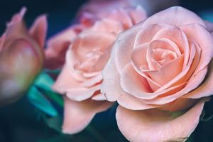 dia-de-la-madre-sao-rosas