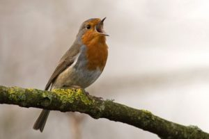 amantes-animales-avistamiento-aves