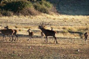 amantes-animales-serrania-cuenca