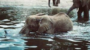 amantes-animales-sri-lanka